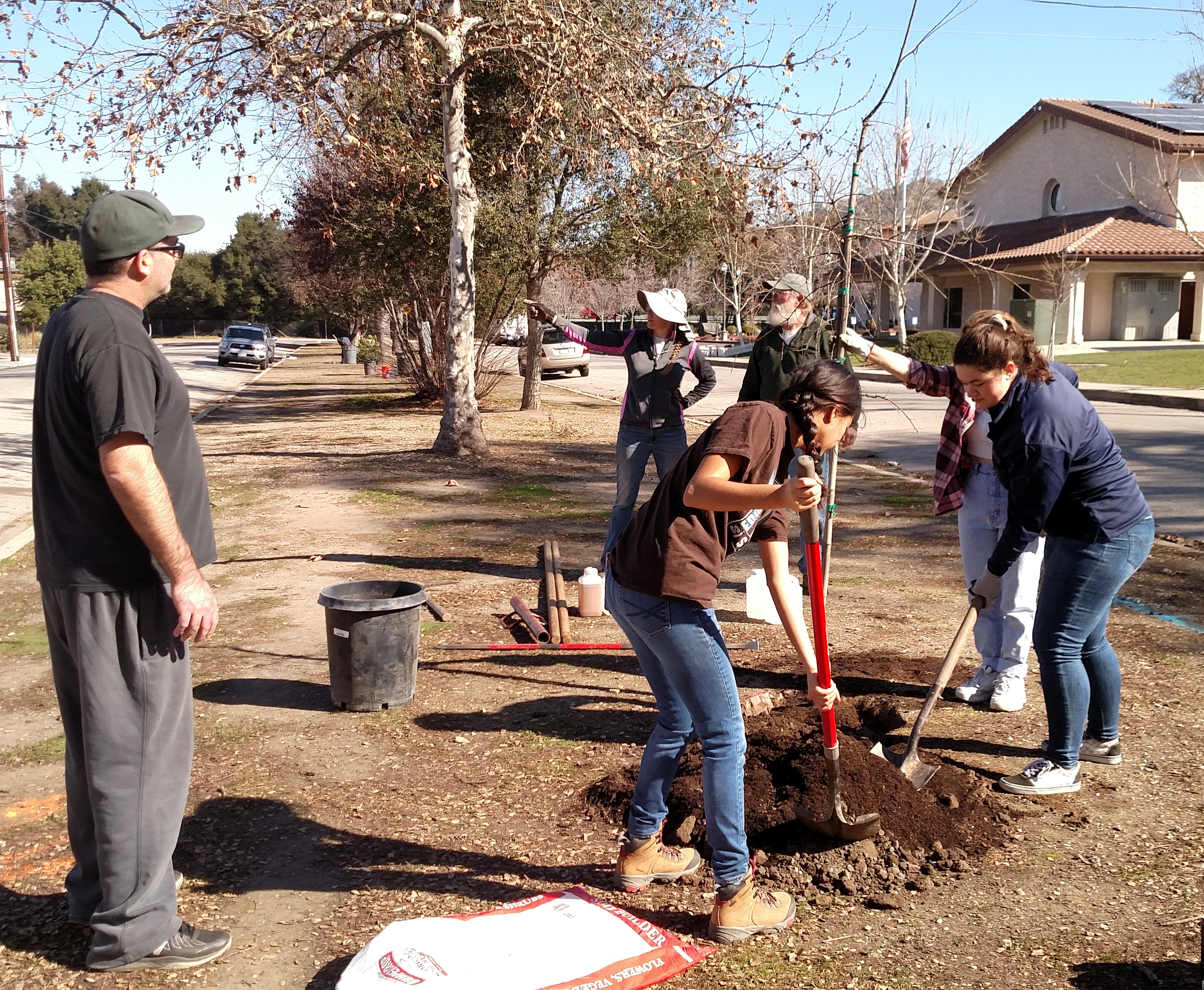 Planting a Valley Oak tree