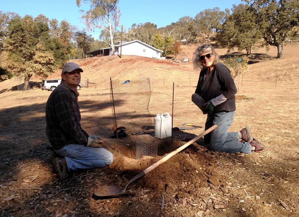 Craig and Kate - planting a live oak seedling