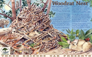 Woodrat Nest - Madrone Trail