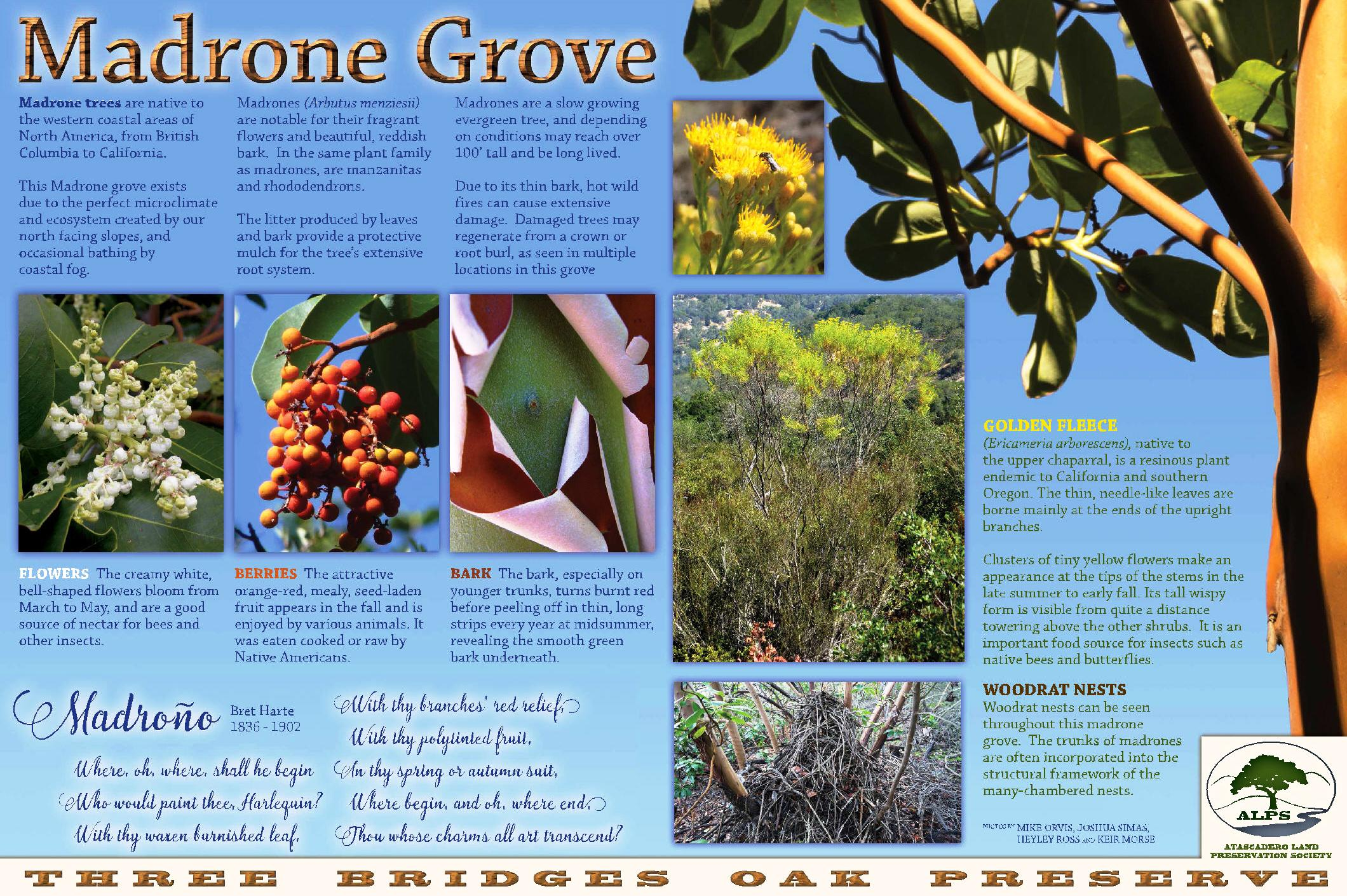 Madrone Grove - Madrone Trail