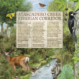 Riparian and Atascadero Creek - Meadow Kiosk